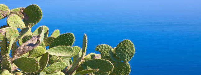 View of the sea and cactus during holidays in Sicily