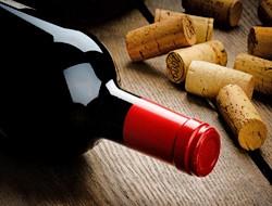 Vinsmagning i vinkælder